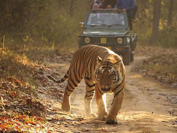 Uttarakhand tour from Surat - Gujarat with Iccon Holidays